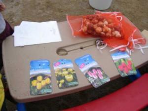 今日のチューリップ球根みんな県品種